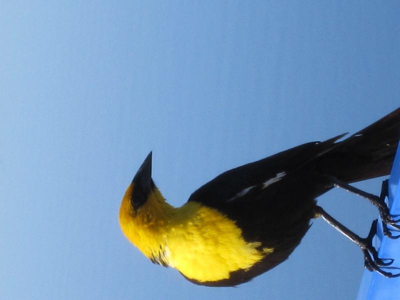 Just a bird i like