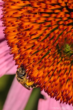 Busy Pollinating