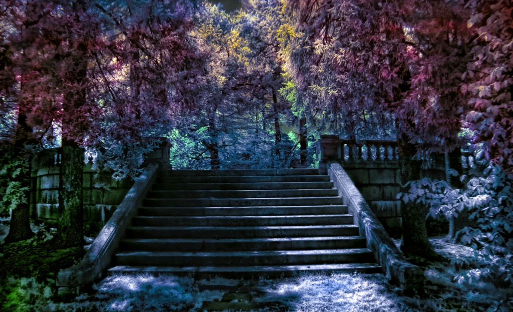 The Park Steps