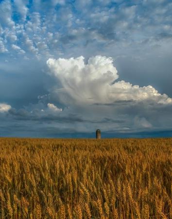 Silo in the Wheat