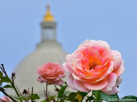 Capitol Rose