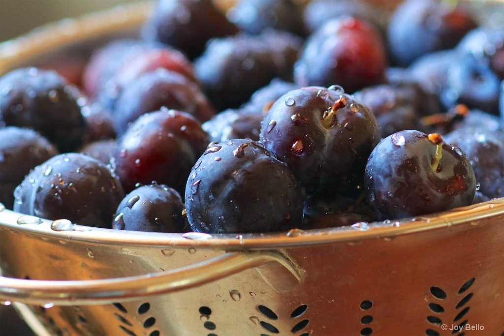 Fresh-picked Plums