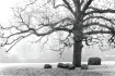 Embracing Tree