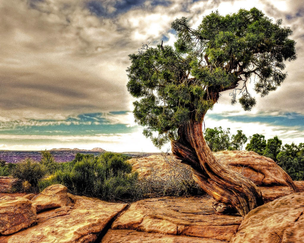 crooked tree - ID: 15199809 © John R. Grede
