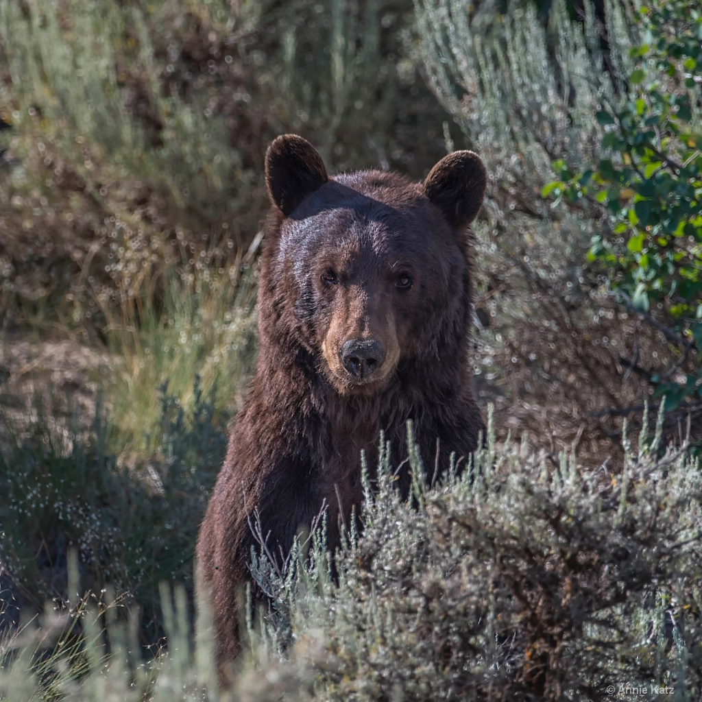 Teenage Bear - ID: 15200079 © Annie Katz