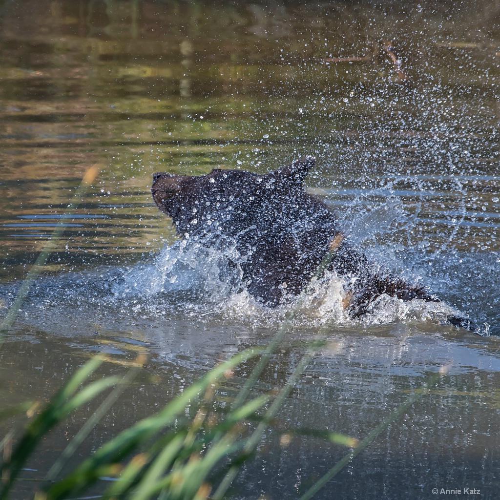 Water Play - ID: 15200082 © Annie Katz