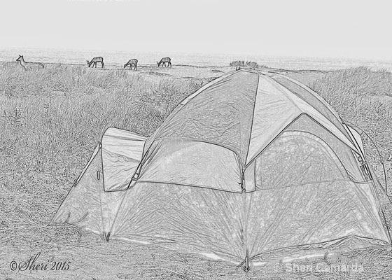 Camp Site - ID: 15200663 © Sheri Camarda