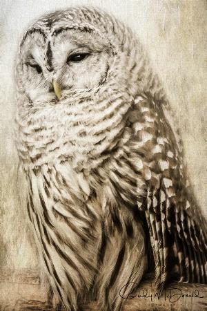 Barred Owl Resting
