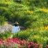 © Carol Flisak PhotoID # 15202079: A Walk in the Garden