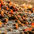 2Sunset stones - ID: 15203049 © Teresa Letkiewicz