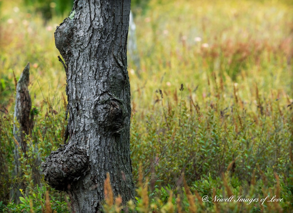 Tree Warts