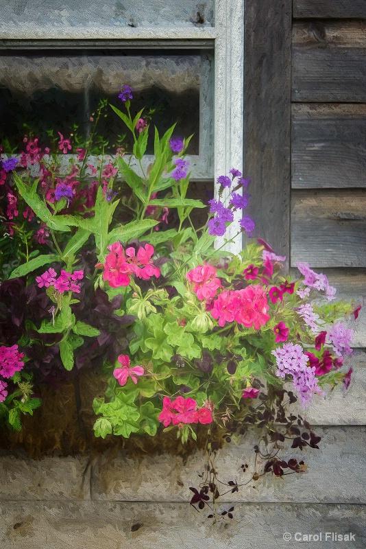 Painterly Window Box - ID: 15207325 © Carol Flisak