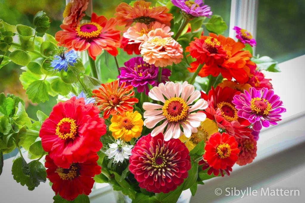 A bouquet of Zinnia - ID: 15209824 © Sibylle G. Mattern