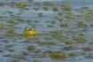 Frog Camoflague