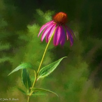 Cone Flower - 3