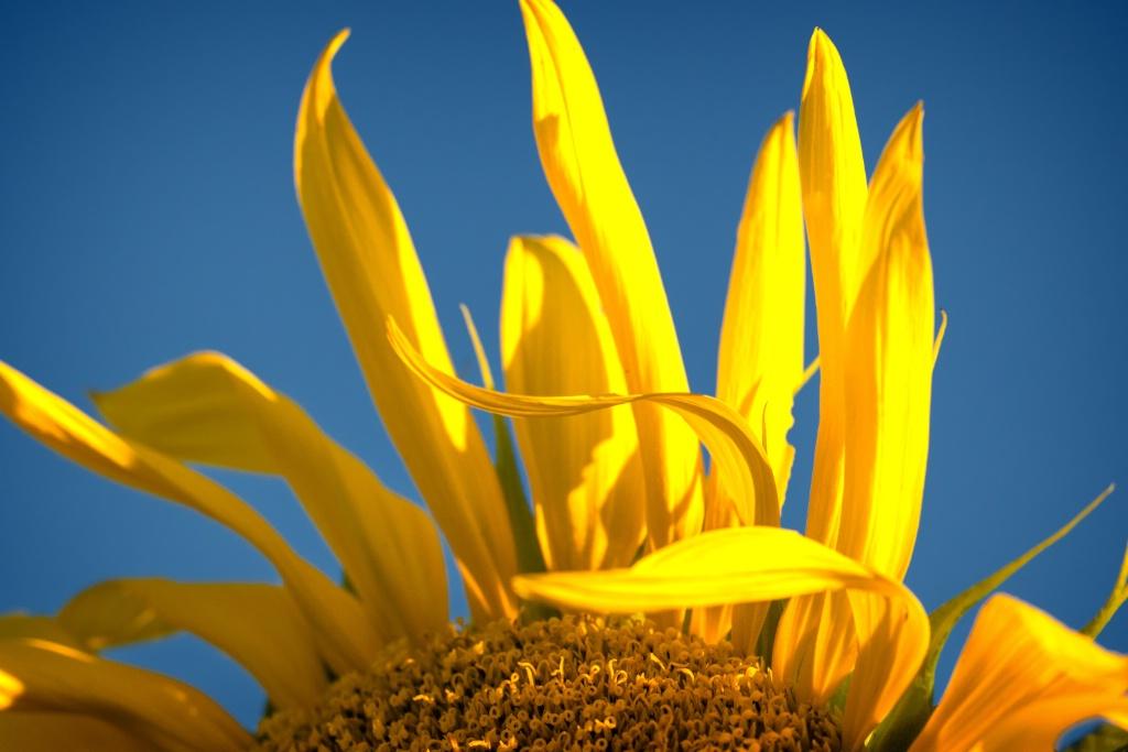 Study in yellow and blue - ID: 15210918 © Teresa Letkiewicz