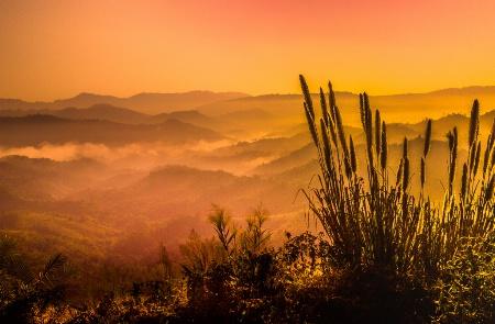 The Light of Daybreak