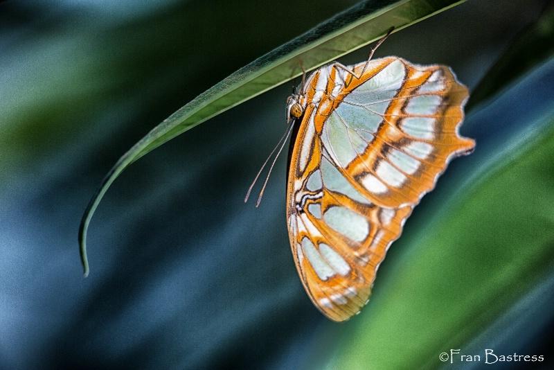 Brookside Gardens, Wheaton, Maryland - ID: 15212143 © Fran  Bastress