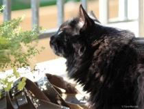 Tucker the Watchful