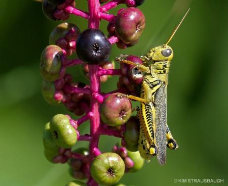 Hang On Grasshopper