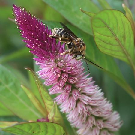 Pollen Snatcher