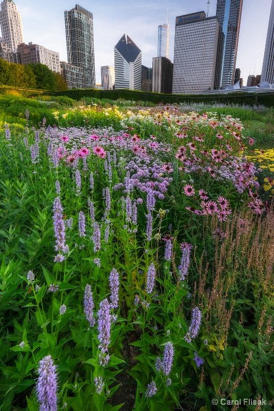 Chicago's Lurie Garden - ID: 15218005 © Carol Flisak