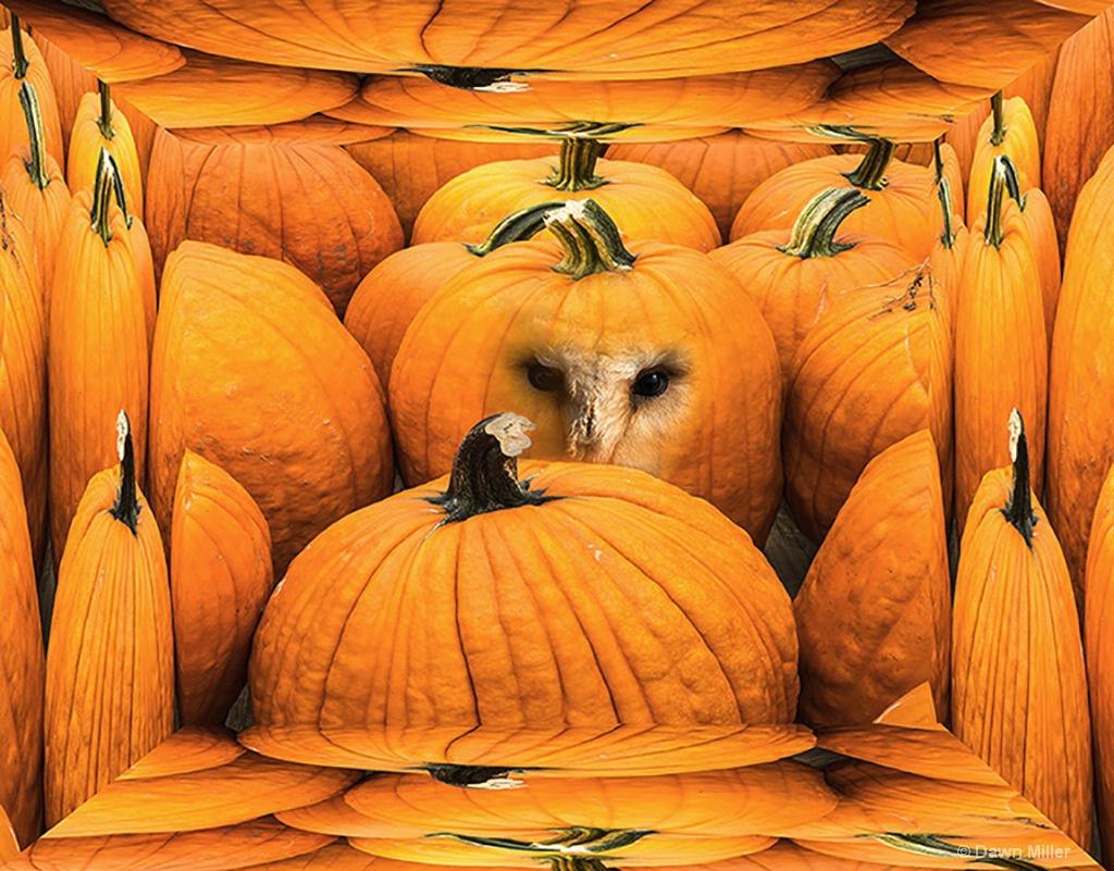 autumn looking back - ID: 15219385 © Dawn Miller