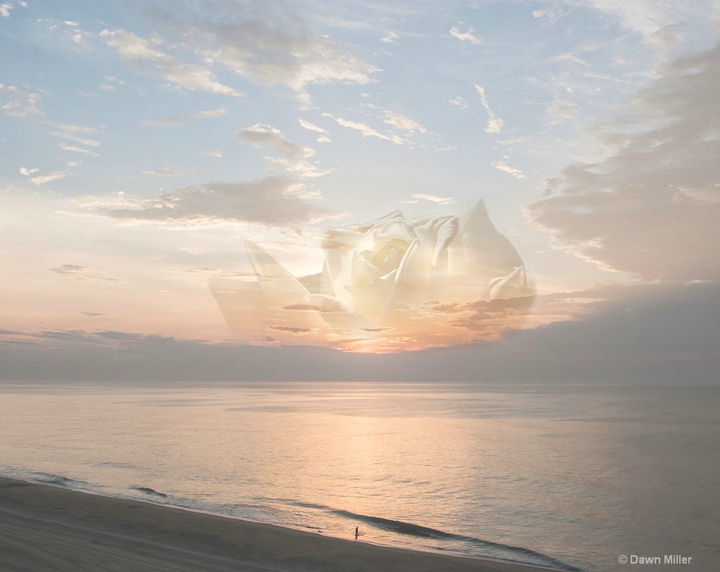 the sun rose - ID: 15219409 © Dawn Miller