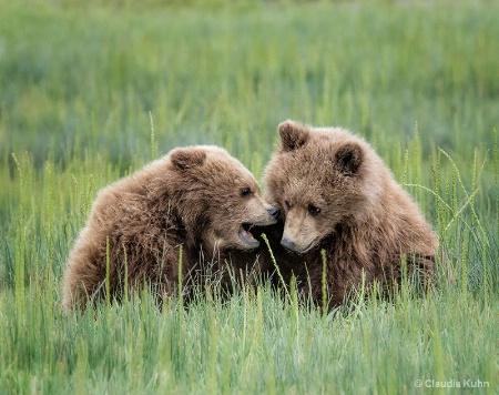 Sibling Gossip