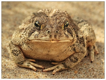 Eli the Toad