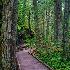 © Eric Reese PhotoID# 15224925: trail-of-cedars-1