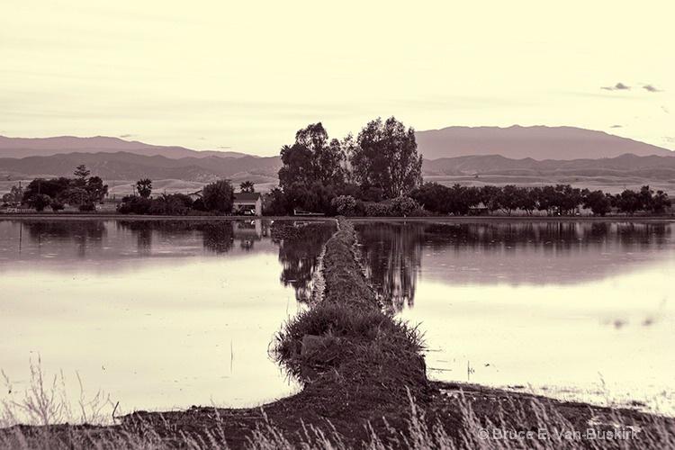 Symmetry in the rice fields near Williams, CA