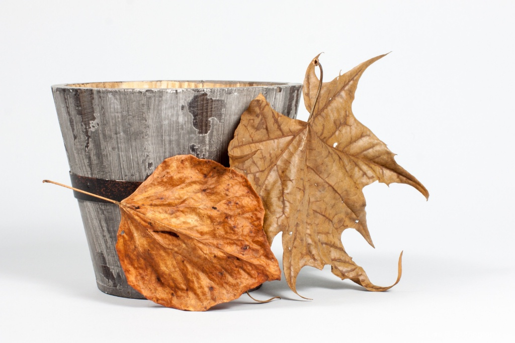 Fall - ID: 15227523 © Lisa R. Buffington