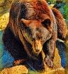 Beary Nice