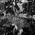© Linda Estes PhotoID # 15232898: Swampy Splendor
