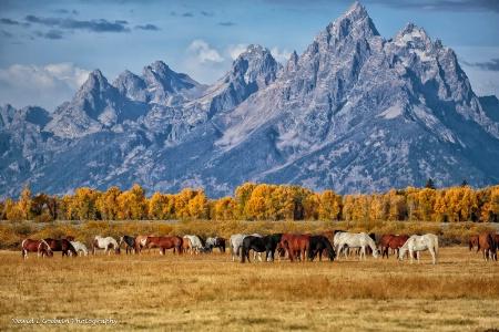 Wild Horses in the Tetons 2