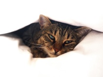 Princess under the blanket