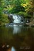 Myosotis Falls