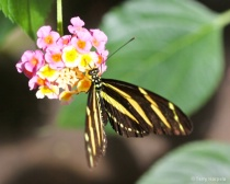 Victoria Butterfly Farm