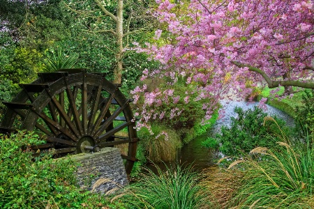Wagon wheel in spring