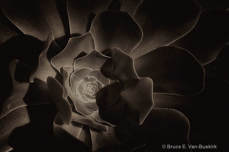 BW of a flower with no color
