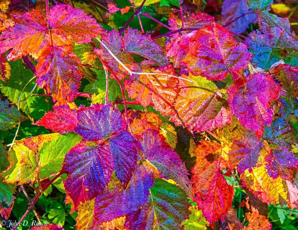 Wet Autumn Leaves - ID: 15240903 © John D. Roach