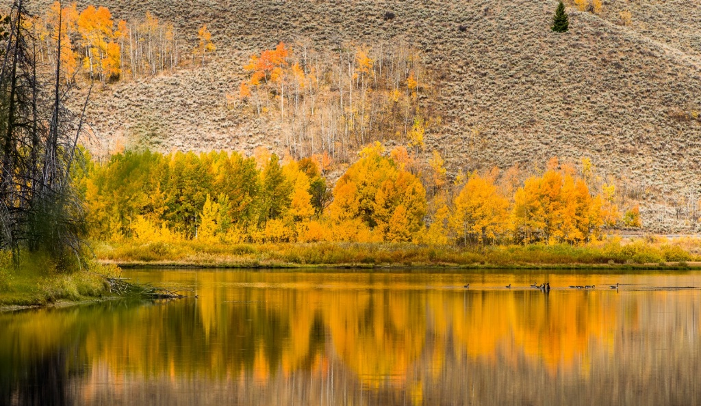 Migration Staging, Oxbow Bend, Wyoming - ID: 15243093 © Thomas L  Willis