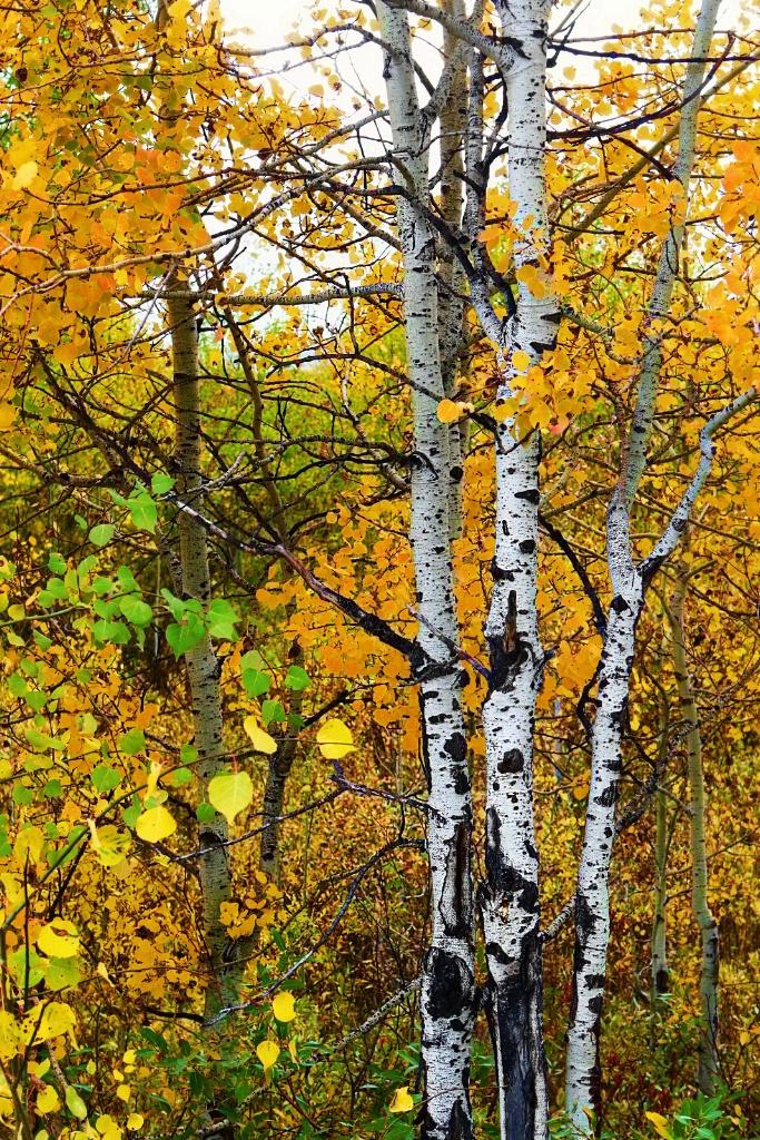 Gotta love Fall!