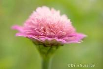 Pink & Pink & Pink Petals