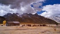 Where the Buffalo Roam-Tetons