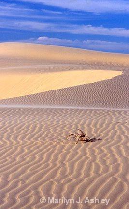 Monahans Sand Dunes - ID: 15254897 © Marilyn J. Ashley