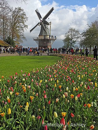 Keukenhof Gardens Windmil, Lisse - ID: 15255115 © Marilyn J. Ashley