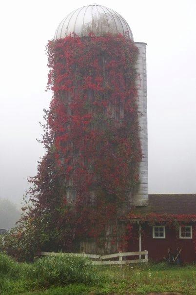 Autumn Silo