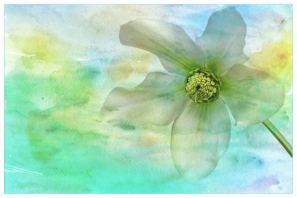 petals in my dream